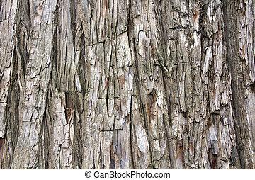 木, 細部, 松, トランク