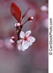 木, 背景, 咲く