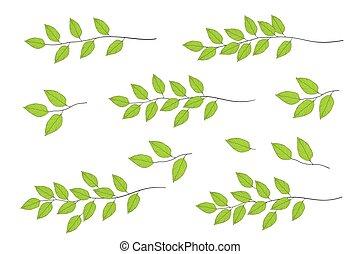 木, 葉, ブランチ, 緑