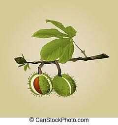 木, 葉, ベクトル, クリ, conkers