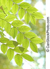 木, 葉, 緑