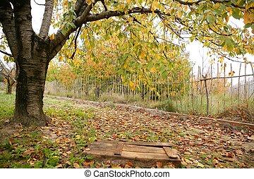 木, 葉, 落ちる, さくらんぼ, 秋, 黄色, 秋