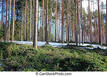 木, 薄くなる, 間隔, 森林