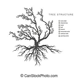 木, 記述, 構造, 将官
