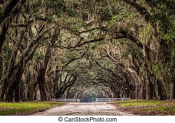 木, 道, 生きている, トンネル, 土, によって, オーク