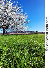 木, 開くこと, spring.