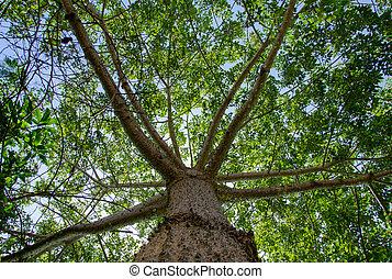 木, 陰, 下に