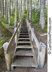 木, 階段, 中に, ハイキング小道