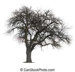 木, 隔離された, アップル