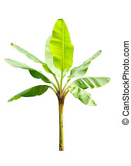 木, 隔離された, 若い, 背景, 白, バナナ