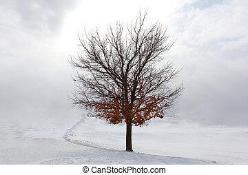 木, 雪, かえで