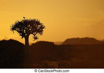 木, 震え, 日没, 鳥