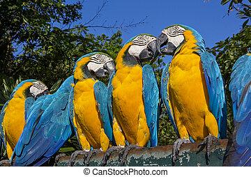木, macaw, カラフルである, グループ