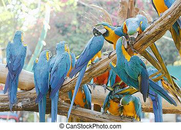 木, macaw, カラフルである