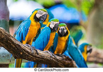 木, macaw, ブランチ, カラフルである, グループ