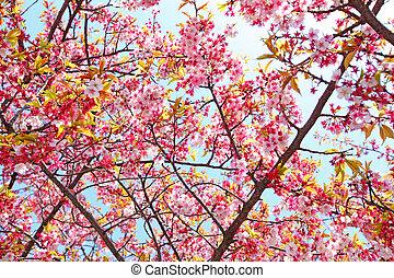 木, sakura