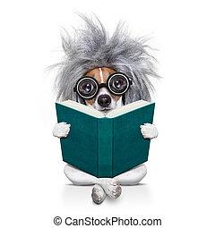 本, 理性的, 犬, 痛みなさい, 読書