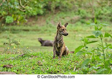 村, 島, フィリピン。, panay, 犬
