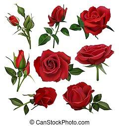 束, ばら, ベクトル, 急成長しなさい, 現実的, 装飾用である, 花, bouquet., 花, 葉, 隔離された, セット, 花, イラスト, 花束, 赤