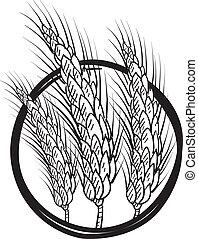 束, ベクトル, 小麦