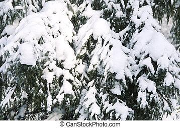 松树, 同时,, 雪