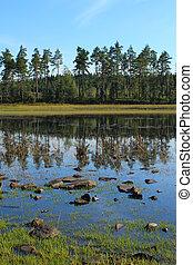 松树, marsjon, 岸, 树, 湖, sweden.