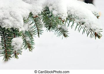 松, 雪が多い