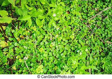 ∥, 林床, の, 小さい, 緑, ぬれた, 葉