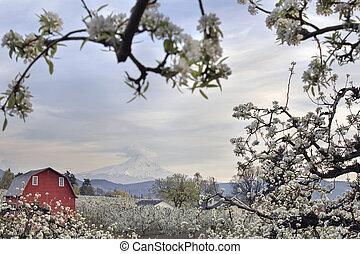 果樹園, 西洋ナシの木, オレゴン, フルーツ, 川, フード