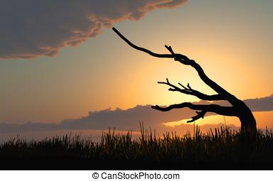 枯れた木, 日没, 日の出