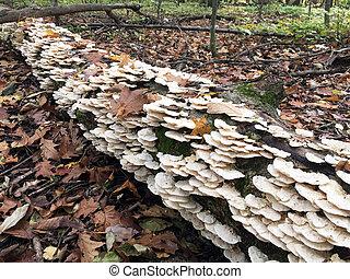架子, 蘑菇, 在上方, 拿, a, 日誌