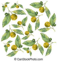 柑橘類, パターン, seamless, clementines., 水彩画, バックグラウンド。, 白