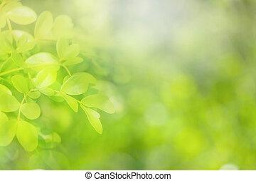 柔らかい 焦点, 自然, 緑, バックグラウンド。