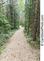 柔らかい, pedestrian 通路, によって, 緑の森林