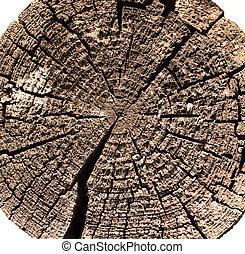 树木, 切割, 报告