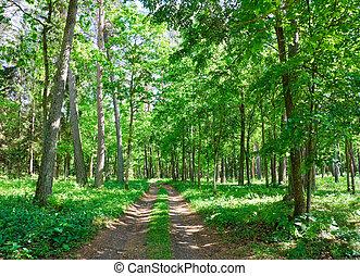 树林, 夏天, 道路