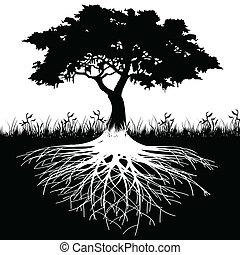 树, 侧面影象, 根