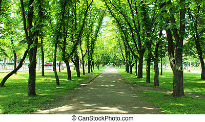 树, 公园, 绿色, 许多, 美丽