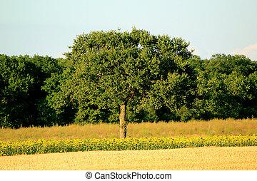 树, 在中, a, 风景