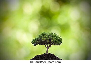 树, 在中, the, 前景