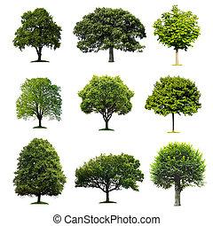 树, 收集