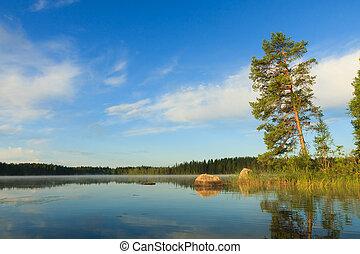 树, 湖, 松树, 早晨