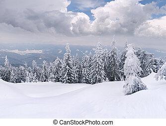 树, 覆盖, 带, hoarfrost, 同时,, 雪, 在中, 山