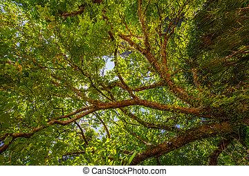 树, 角度, 低, 察看