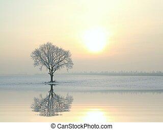 树, 阳光充足, 冬季, 橡木, 早晨