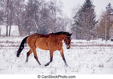 栗毛の馬, 雪, 小走りに走ること