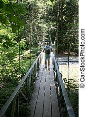 株, 写真, の, a, フィート, briidge, 家長の果樹園, 基礎のより雨が多い国立公園