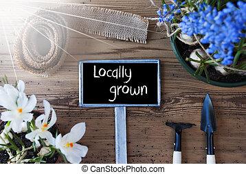 栽培された, 印, 春, locally, 日当たりが良い, 花, テキスト
