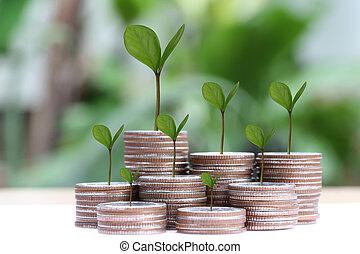 栽培された, 植物, ビジネス, concept., 若い, 銀, 成長, コイン, 山