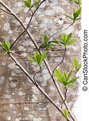 栽培された, 茎, 実生植物